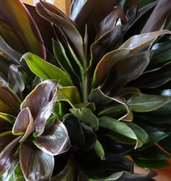 グリーンだけの花束